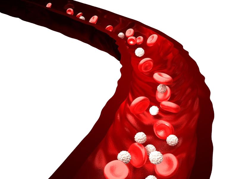 bílé krvinky a léčba rakoviny